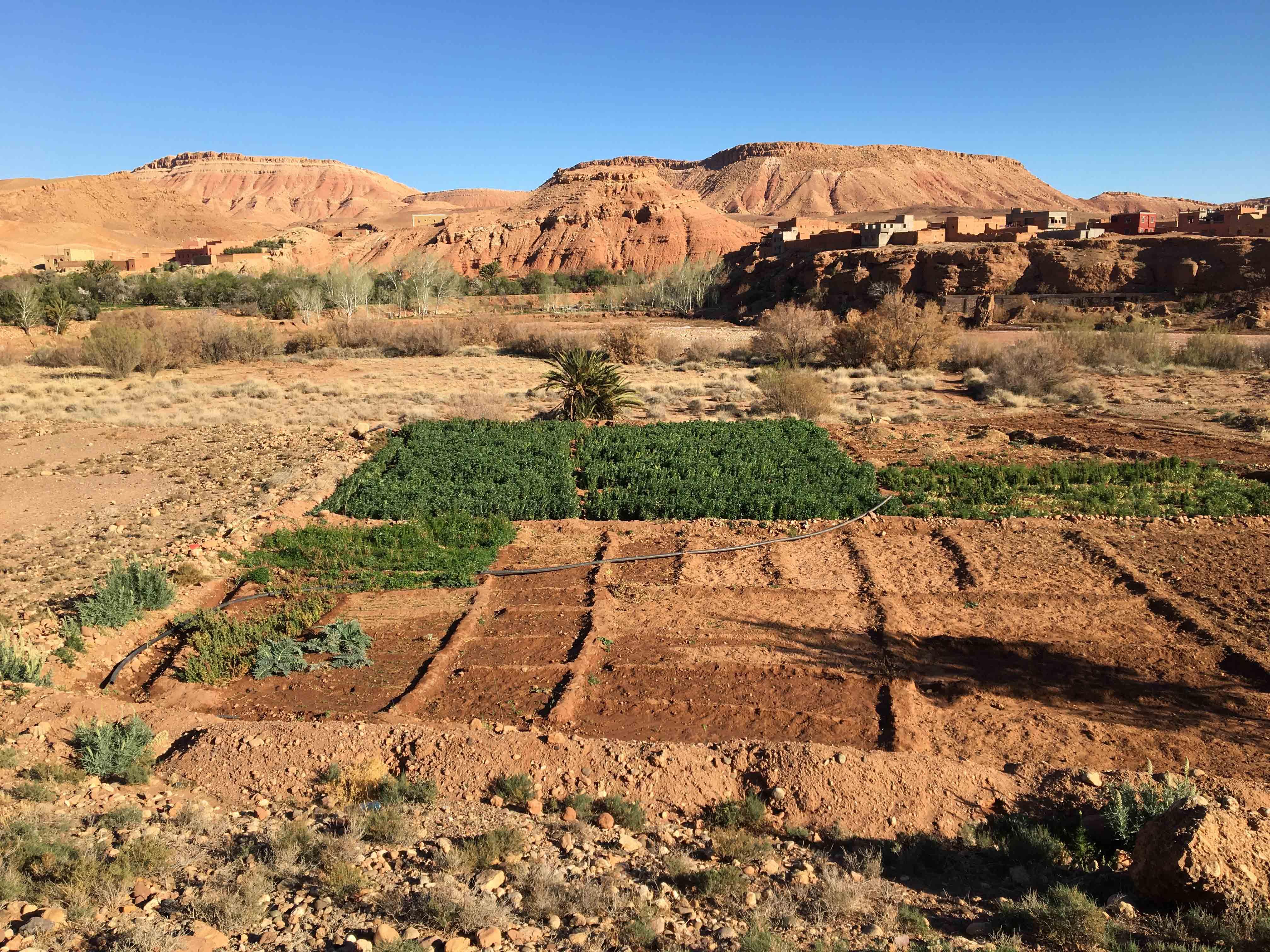 legumesbio-jardins-kasbahtitrit